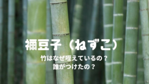 禰豆子(ねずこ)竹はなぜ咥えているの?いつから?誰がつけたの?